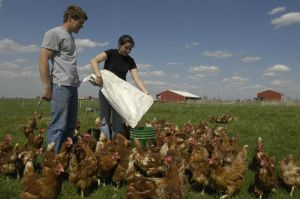 Jeremy House, along with his wife Cherie, work together on most every aspect of the farm. Photo credit: meadowhavenfarm.com