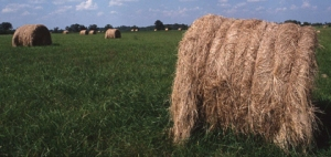 Grass and forages could lead to a more profitable 2015 and beyond.