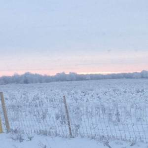 Even under snow, healthy soil will be teaming with biological activity.