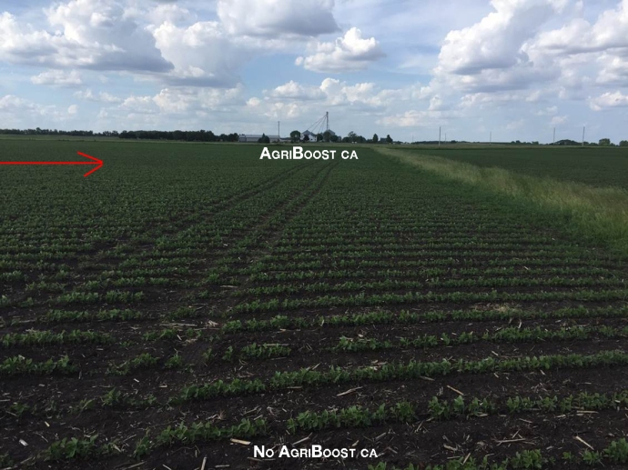 Soybean AgriBoost CA