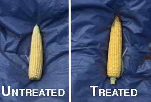 Gary's corn edited